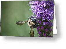 Liatris And Bee Squared 2 Greeting Card