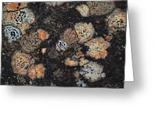 Lichen Abstract Greeting Card