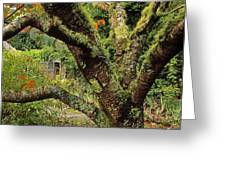Lichen Covered Apple Tree, Walled Greeting Card