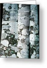 Lichen On Cinnamon Trees Greeting Card by Georgette Douwma