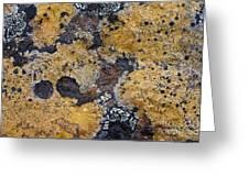 Lichen Pattern Series - 10 Greeting Card