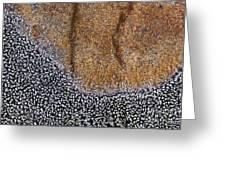 Lichen Pattern Series - 11 Greeting Card