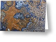 Lichen Pattern Series - 35 Greeting Card