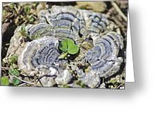 Lichen The Shamrock Greeting Card