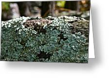 Lichens Lace Greeting Card