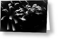 Licorice Sky Greeting Card