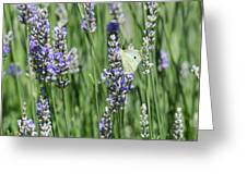 Life In The Garden Greeting Card