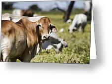 Life On The Farm Greeting Card