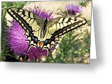 Lifes Harmony  Greeting Card