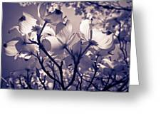 Light And Shadow Play Greeting Card by Victoria Ashley