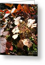Light As Paper Greeting Card by Trish Hale