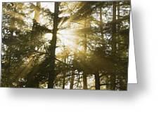 Light Beams Shining Through Trees And Fog Greeting Card