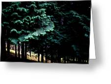Light Forest Greeting Card