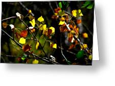 Light On The Leaves Greeting Card