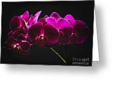 Light Painted Orchids Greeting Card