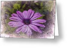 Light Purple Daisy Greeting Card