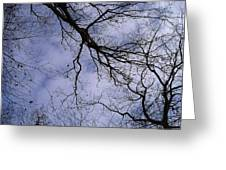 Lightening Branches Greeting Card