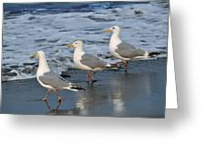Lighthearted Seagulls Greeting Card