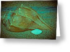 Lightning Whelk Greeting Card