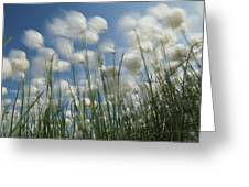 Like Spots Of White Clouds, The Aging Greeting Card