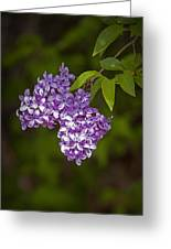 Lilac Flower Blossoms No. 319 Greeting Card
