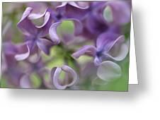 Lilac Syringa Sp Flower, Close Greeting Card