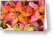 Lilies Background Greeting Card
