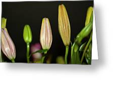Lilies In A Row Greeting Card