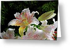 Lilies In The Rain Greeting Card
