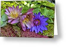 Lilies No. 29 Greeting Card