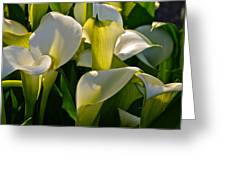 Lilies Of The Nile Greeting Card