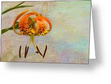 Lilium Pardalinum Greeting Card