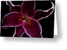 Lilium Stargazer Greeting Card