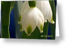 Lillie Greeting Card