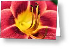 Lilly For A Day Greeting Card