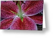 Lilly Heart Greeting Card