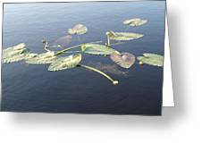 Lilly Pads Adrift Greeting Card