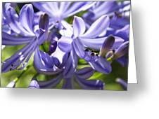 Lillyroyal Greeting Card