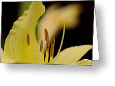 Lily - Flower - Fore And Aft Greeting Card