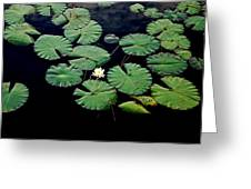 Lily Alone Greeting Card