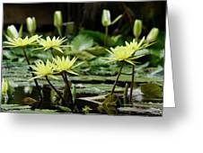 Lily And Friends Greeting Card