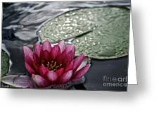 Lily And Pad Greeting Card