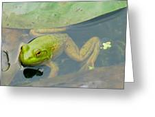Lily Frog Greeting Card