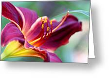 Lily - Hardy Greeting Card