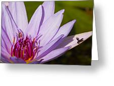 Lily Life Greeting Card