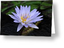 Lily Moon Greeting Card