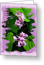 Lily Of The Valley - In The Pink #1 Greeting Card