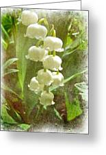 Lily Of The Valley - In White #2 Greeting Card