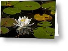 Lily On The Pond Greeting Card