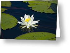 Lily Pad And Flower Greeting Card